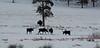 Moose on Round Prairie.
